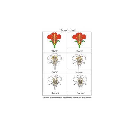 Parts of a Flower Nomenclature - PDF File