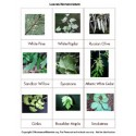 Leaf Nomenclature Cards - PDF Only