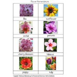 Flower Nomenclature Cards - PDF Only